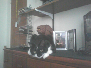 Freya on the dresser1